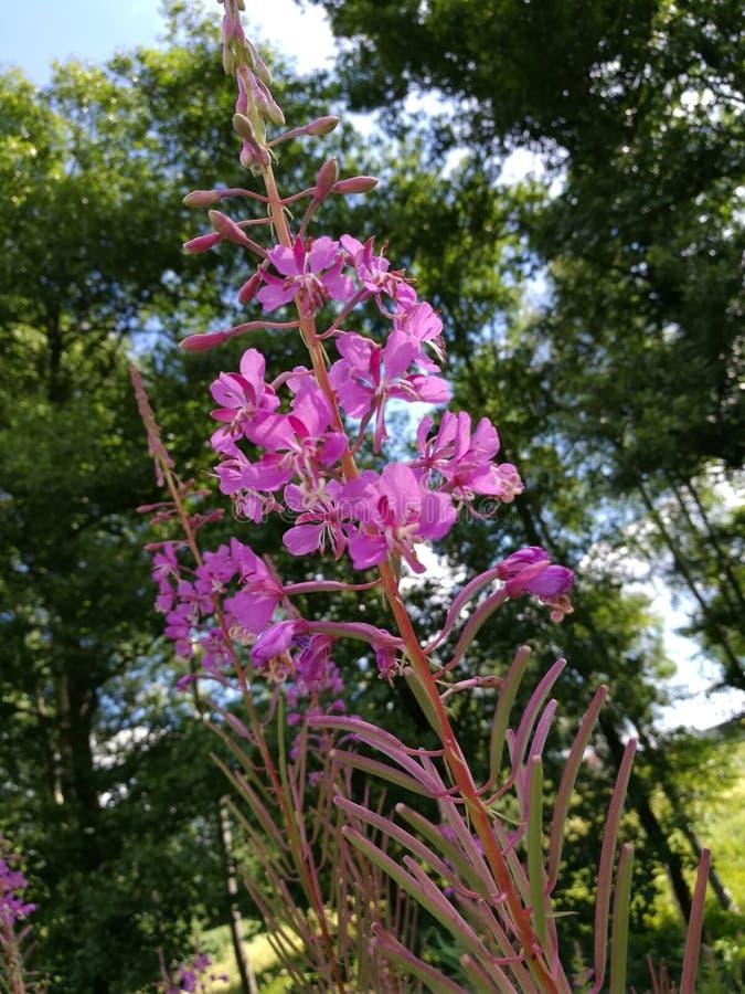 Download Blumenpurpur stockbild. Bild von blume, purpurrot, nett - 96928835