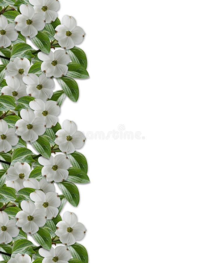 Blumenrand-Hartriegelblüten vektor abbildung