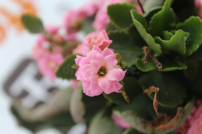 Blumenschießen mit Makroschießen lizenzfreie stockbilder