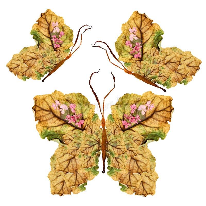 Blumenschmetterling gemacht von den trockenen Blättern und von den Blumen lizenzfreies stockbild