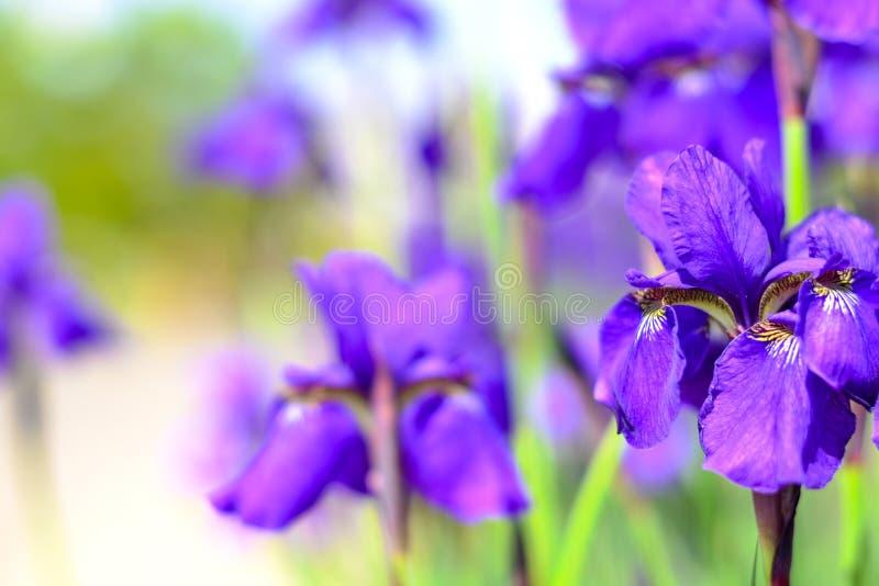 Blumensommer stockfoto