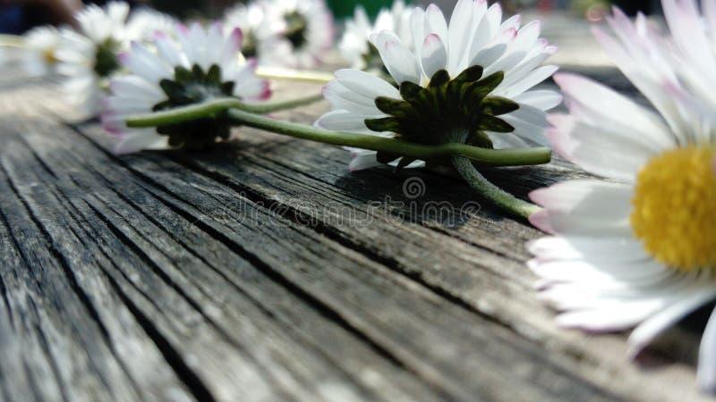 Blumensommertag stockfotografie