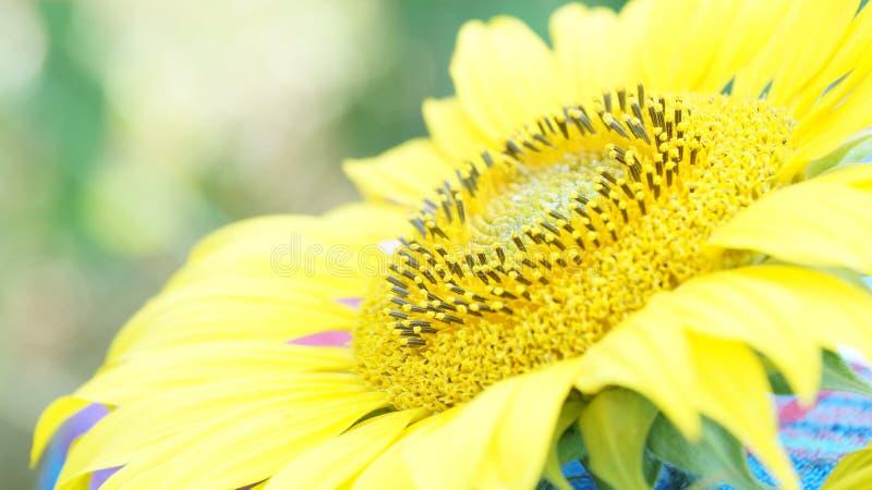 Blumensonnenblume lizenzfreies stockbild