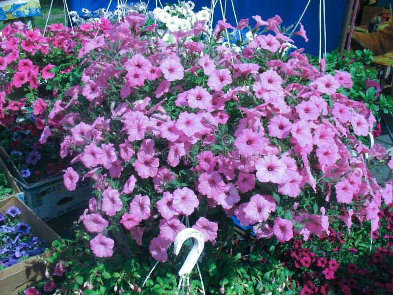 Blumenspeicher in den frischen Blumen des Landwirtmarktes stockfotografie