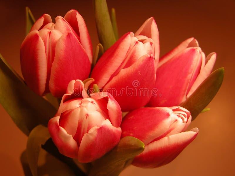 Blumenstrauß lizenzfreie stockfotos