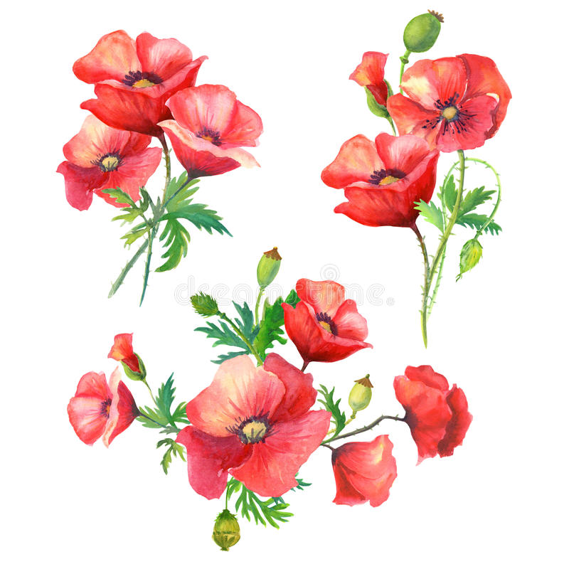 Blumenstrauß-Aquarellblumen stock abbildung