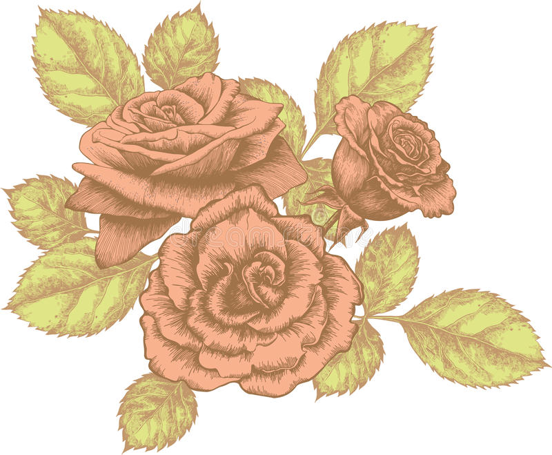 Blumenstrauß der blühenden Rosen stock abbildung