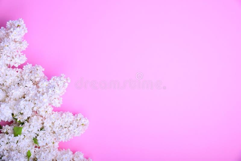 Blumenstrauß der blühenden weißen Flieder lizenzfreies stockbild