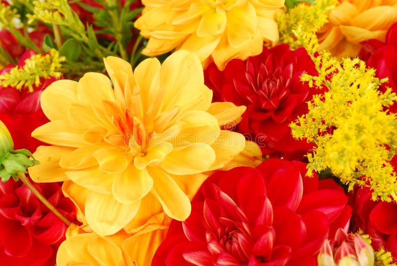 Blumenstrauß der Dahlie blüht Nahaufnahme. stockbilder
