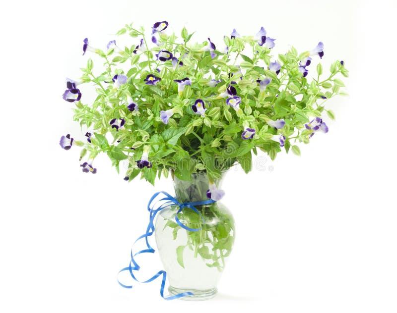 Blumenstrauß der frischen torenia Blumen stockbild