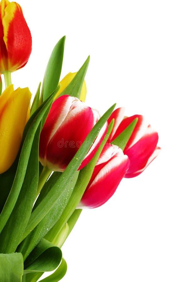 Blumenstrauß der frischen Tulpen stockfoto