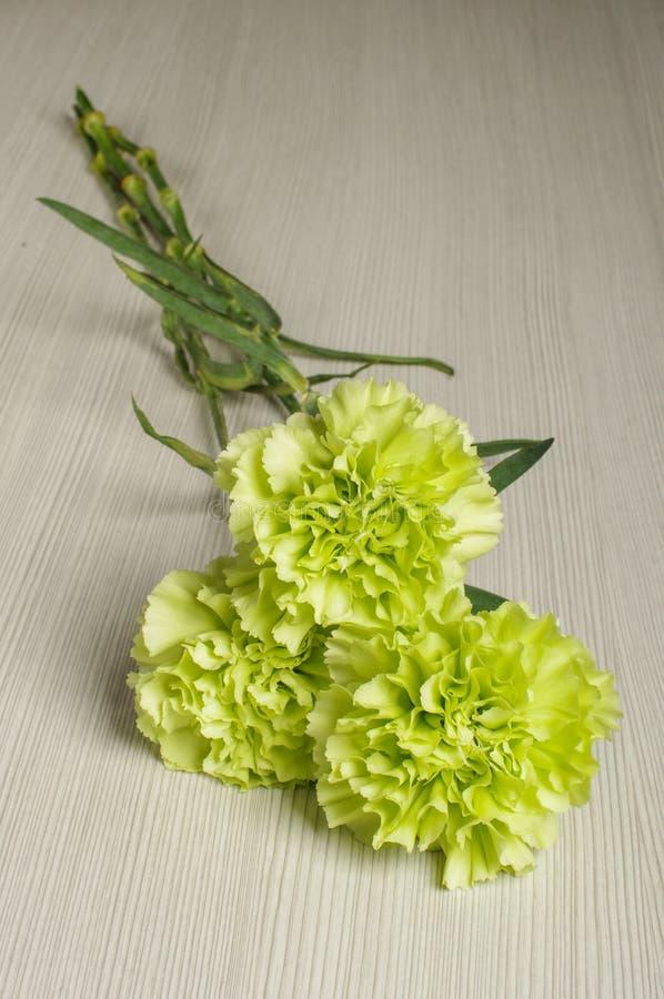 Blumenstrauß der Gartennelke blüht auf dem hellen Bretterboden lizenzfreie stockfotos
