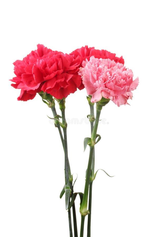 Blumenstrauß der Gartennelken stockbild