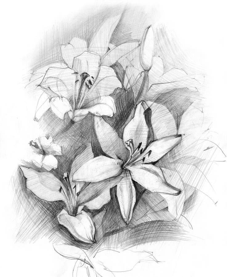 Blumenstrauß der Lilie lizenzfreie abbildung