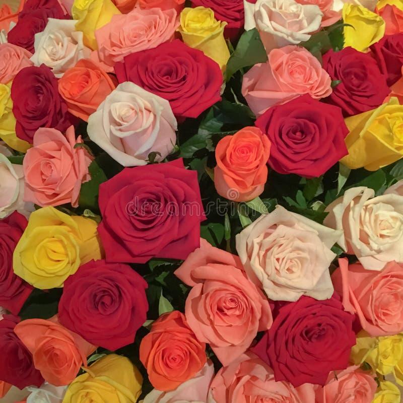Blumenstrauß der mehrfarbigen Rosennahaufnahme 101 Rosen Mutter`s Tag stockfotografie