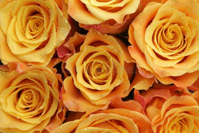 Blumenstrauß der Rosen lizenzfreies stockbild