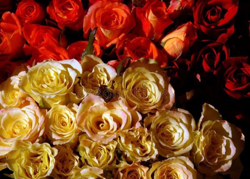Download Blumenstrauß der Rosen stockbild. Bild von bündel, blumenstrauß - 44813