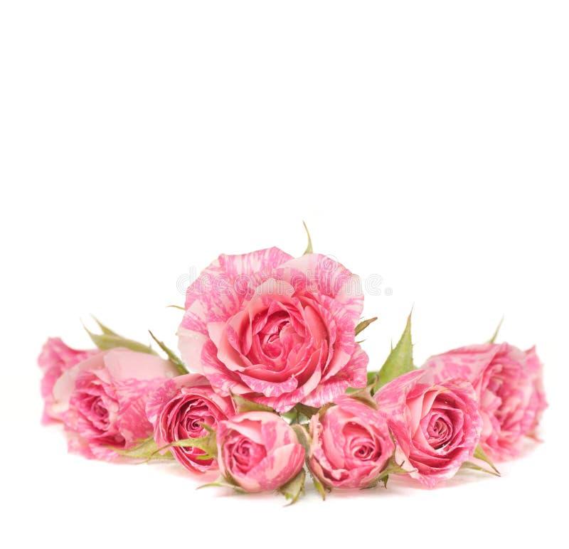 Blumenstrauß der schönen Blumen auf weißem Hintergrund.
