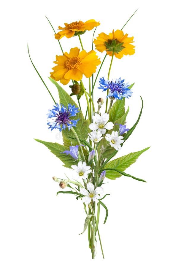 Blumenstrauß der wilden Blumen des Feldes, Ostern-Farben, lokalisiert lizenzfreies stockfoto