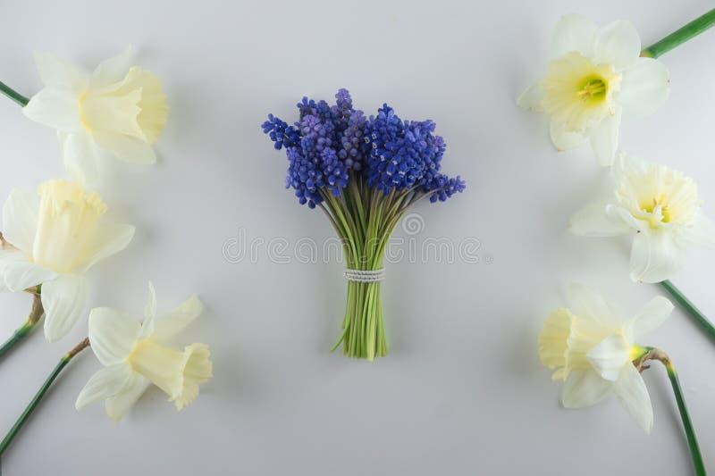 Blumenstrauß des blauen Muscari und der Narzisse Gerade ein geregnet Wei?er Hintergrund stockfotografie