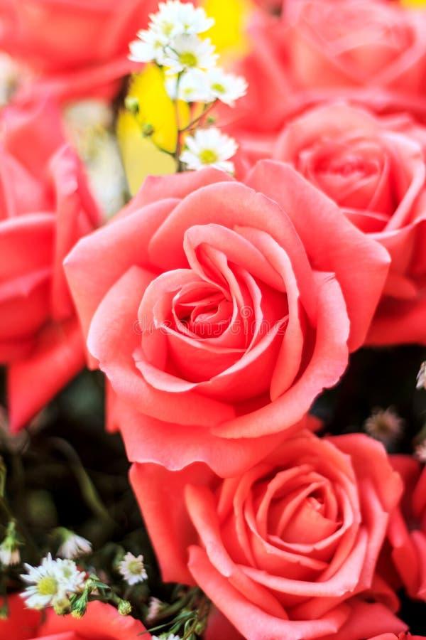 Blumenstrauß des Hintergrundes der Blumen der roten Rosen und der weißen Blumen stockfotos