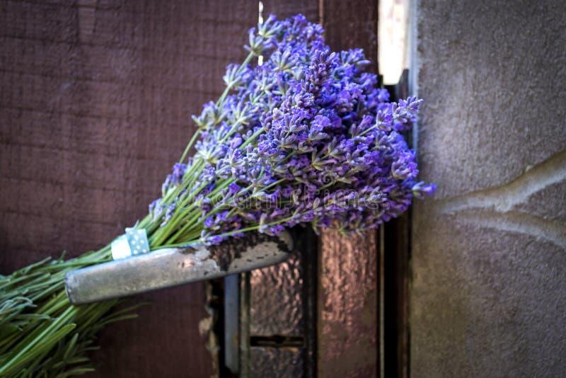 Blumenstrauß des Lavendels auf dem Verschluss der Weinlesetür Abschluss oben lizenzfreies stockbild