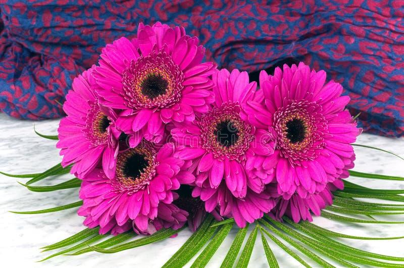 Blumenstrauß des purpurroten gerber mit einem violetten blauen Hintergrund stockfotografie