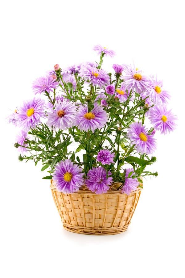 Blumenstrauß in einem Korb lizenzfreie stockfotografie