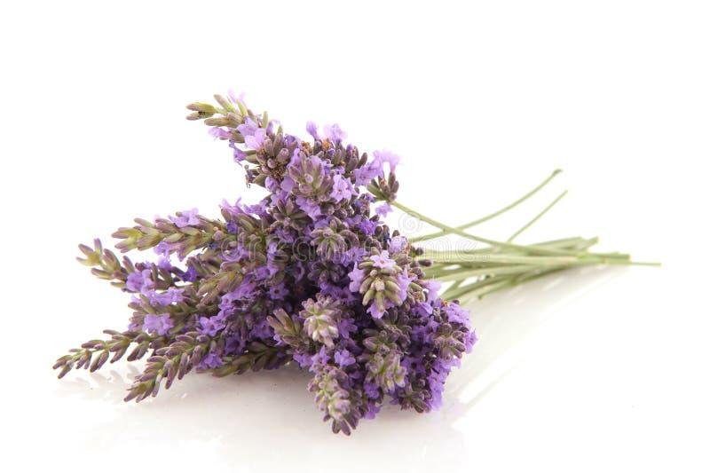 Blumenstrauß-Lavendel stockfotos