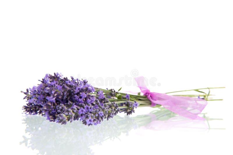 Blumenstrauß-Lavendel auf weißem Hintergrund stockfotografie