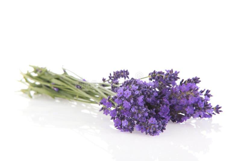 Blumenstrauß-Lavendel auf weißem Hintergrund stockfotos