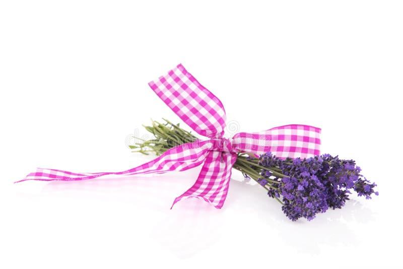 Blumenstrauß-Lavendel mit Band stockfoto
