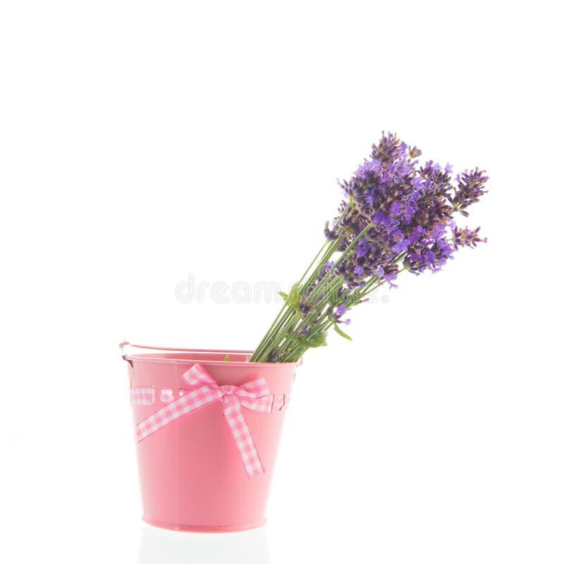 Blumenstrauß-Lavendel in wenigem Eimer auf weißem Hintergrund stockfotos