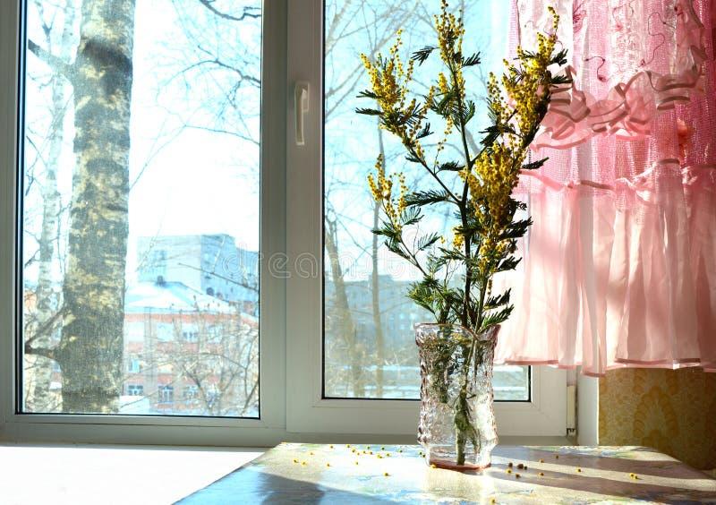 Blumenstrauß, Mimose, Fenster, Sonne, Rosa, Spitze, ein Vorhang oder mit einem Spielzeugschmetterling, Licht, Feiertag, am 8. Mär lizenzfreie stockbilder