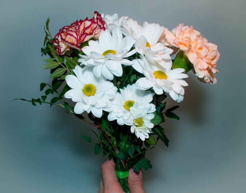 Blumenstrauß mit Blumen des weißen Gänseblümchens schließen zur Hand auf einem grünen Hintergrund lizenzfreies stockfoto