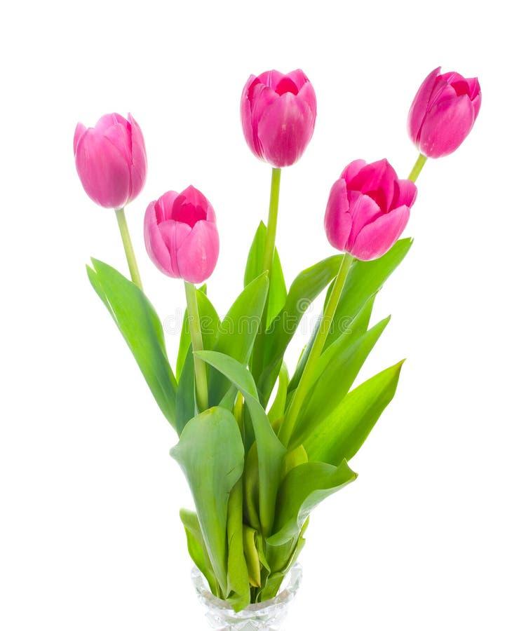 Blumenstrauß mit fünf rosafarbener Tulpen lizenzfreie stockbilder