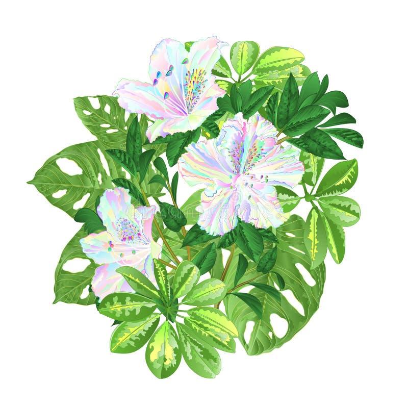 Blumenstrauß mit schönen mehrfarbigen Rhododendren des tropischen Blumenblumengestecks mit Schefflera- und Monstera-Weinlese VE vektor abbildung