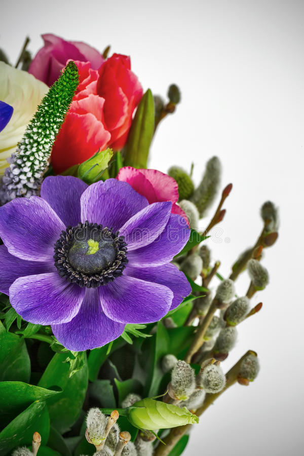 Blumenstrauß Purpurrote Anemone stockfoto