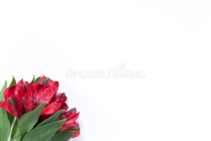 Blumenstrau? roten Blumen Alstroemeria auf wei?em Hintergrund Flache Lage horizontal Modell mit Kopienraum f?r Gru?karte lizenzfreie stockfotos
