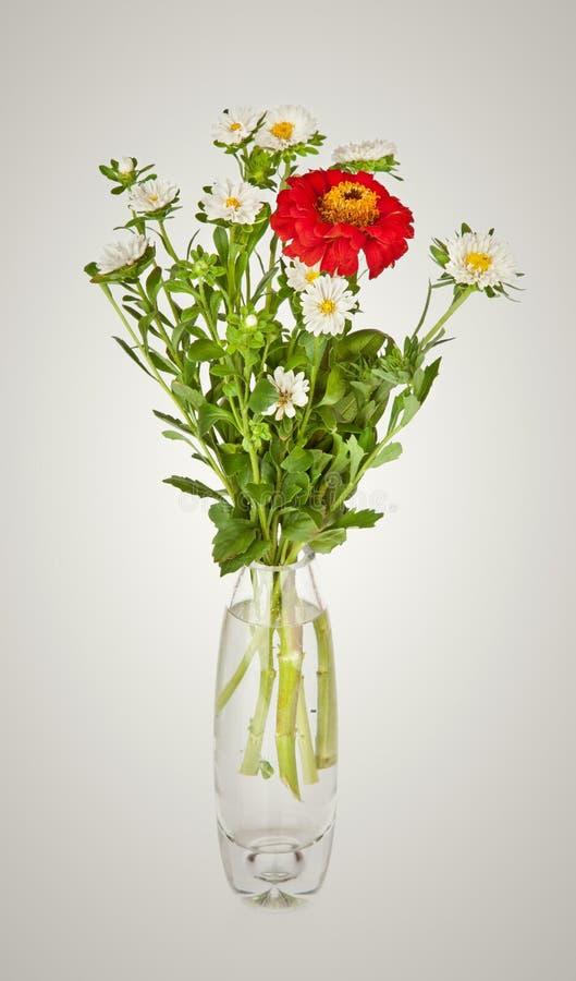 Blumenstrauß vom roten GänseblümchenGerbera und weiße Aster im Glasvase lizenzfreies stockfoto