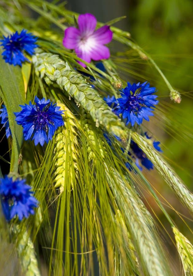 Blumenstrauß vom Sommerfeld lizenzfreie stockbilder