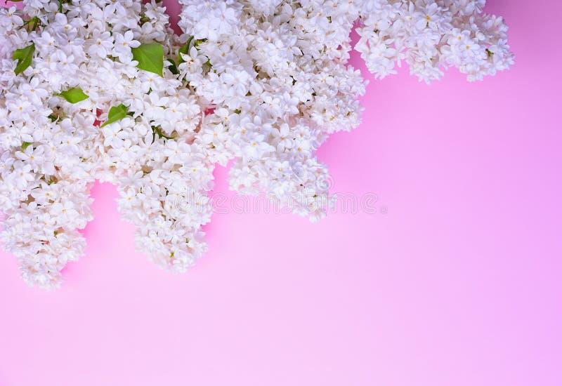 Blumenstrauß von blühenden weißen Fliedern stockfotografie