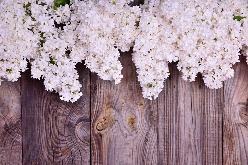 Blumenstrauß von blühenden weißen Fliedern auf einer grauen Holzoberfläche stockfotos