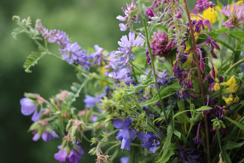 Blumenstrauß von Blumen, purpurrote Blumen, Sommerzeit lizenzfreie stockfotos
