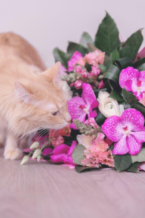 Blumenstrauß von Blumen und von Katze Geschenk und Haustier orchideen lizenzfreie stockfotografie