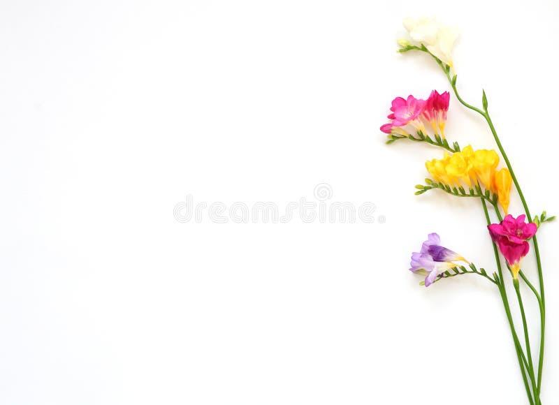 Blumenstrauß von bunten Freesieblumen auf Weiß für Frühling und Sommerferien und Postkarte stockbild