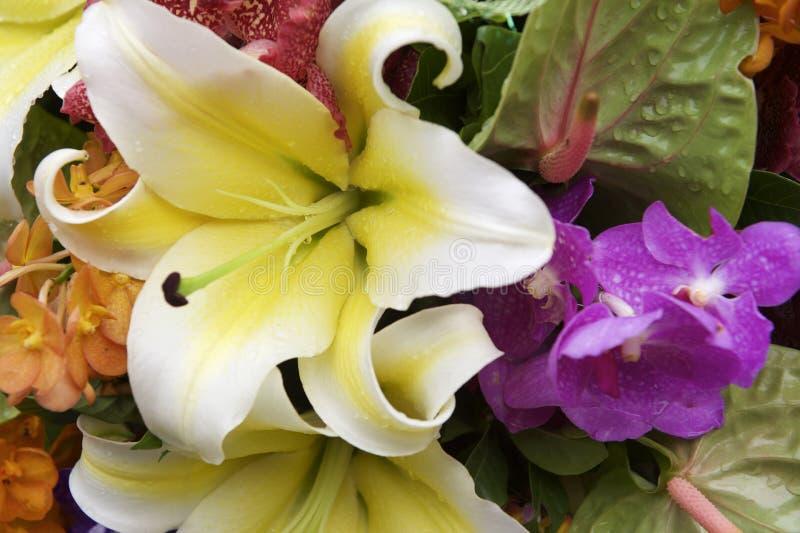 Blumenstrauß von bunten tropischen Blumen stockfotos