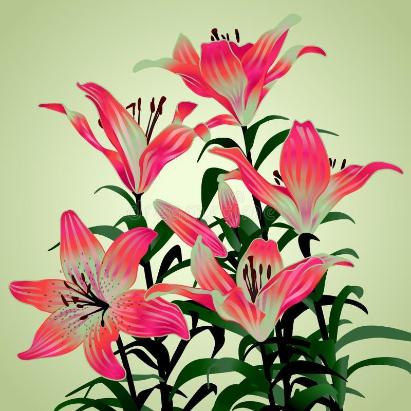 Blumenstrauß von den Lilien stock abbildung