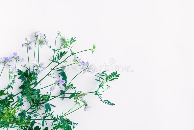 Blumenstrauß von den violetten Edelwickeblumen lokalisiert auf weißem Hintergrund Flache Lage, Draufsicht stockfotografie
