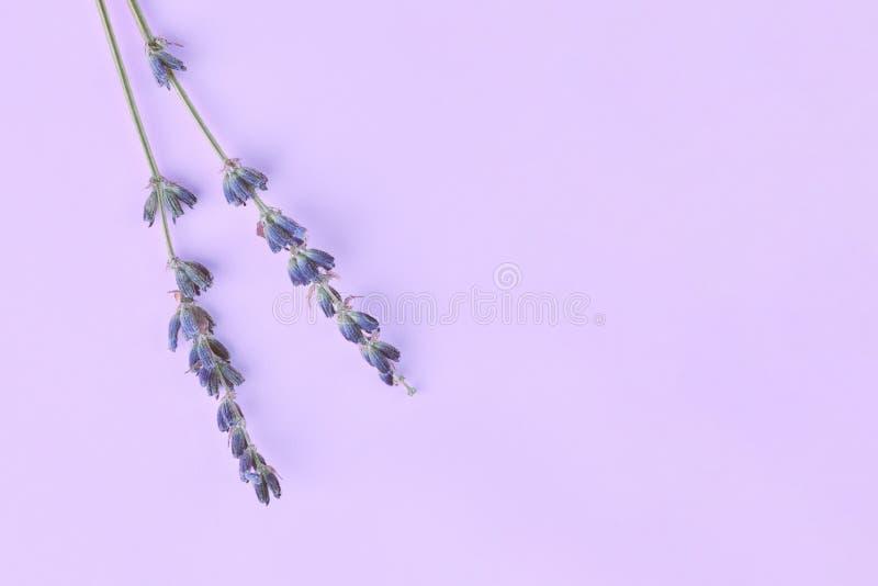Blumenstrauß von den violetten lila purpurroten Lavendelblumen vereinbart auf Tabellenhintergrund Draufsicht, flacher gelegter Sp stockfoto